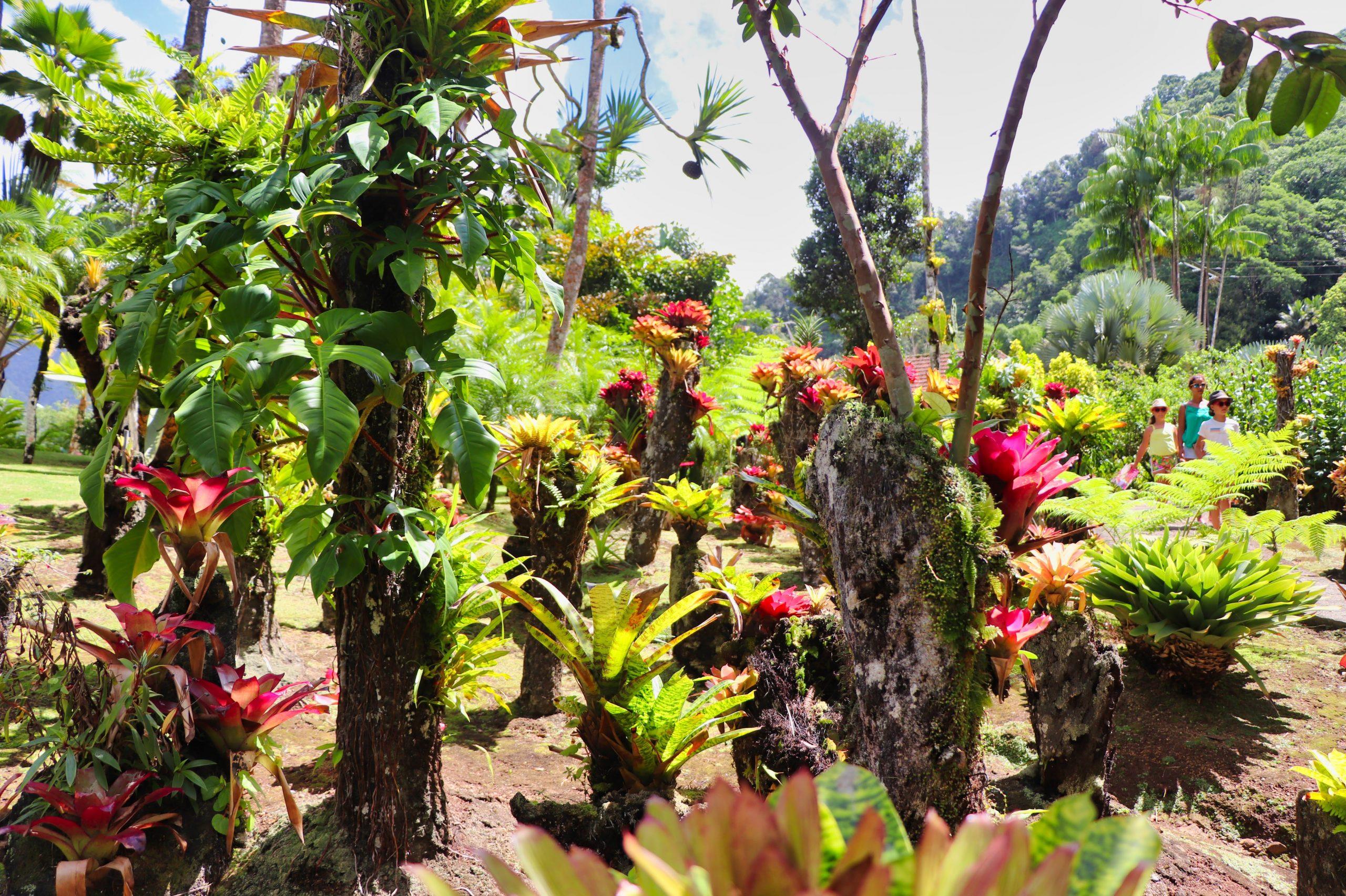 les jardins de Balata